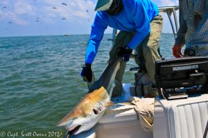Fly Fishing sharks Southeastern Angling