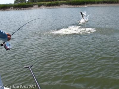Fly Fishing Tarpon Jekyll Island Guide