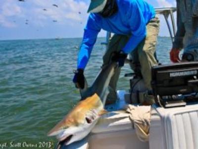 Near Shore Fishing shark fishing Trips and charters